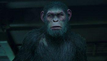 apes_begins